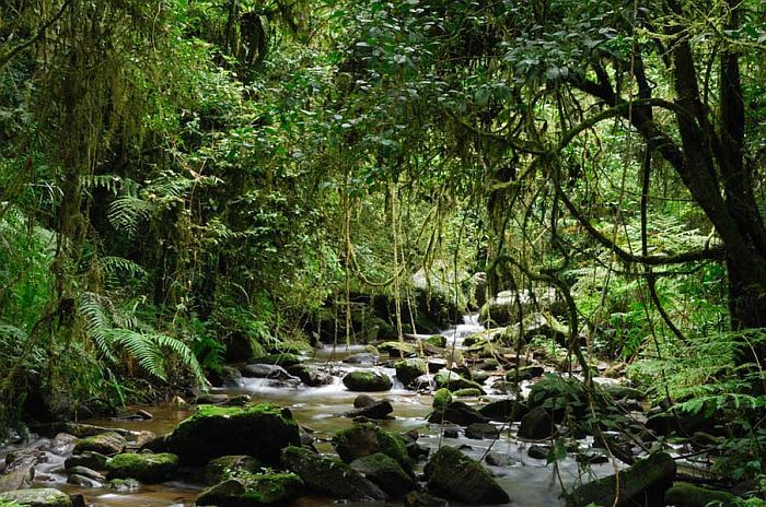 Cedarberg Travel   Rainforests, Mountains & Beaches of Southern Madagascar