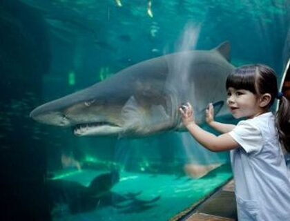 Things to do with kids in Cape Town - Aquarium