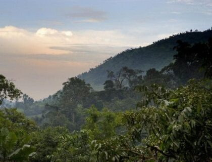 safaris in Bwindi impenetrable forest