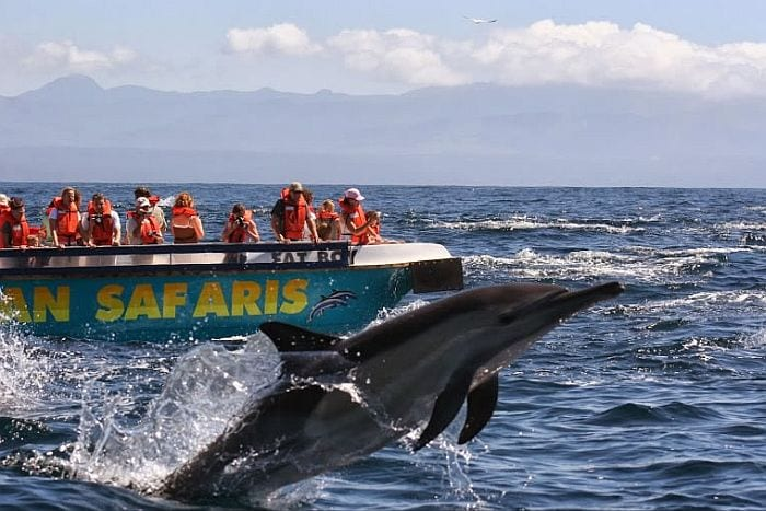 Garden Route attractions - Ocean cruises at Plettenberg bay, things to do with children on the Garden Route