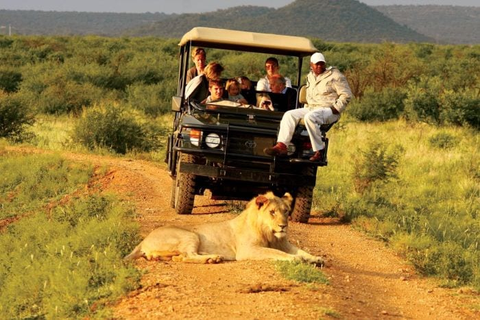 Madikwe-Hills-activities-game-drive