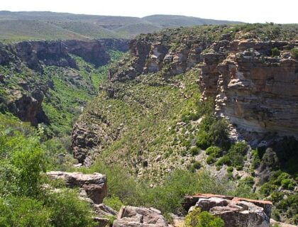 Nieuwoudtville gorge, tips for spring flower-viewing in Namqualand and Cederberg