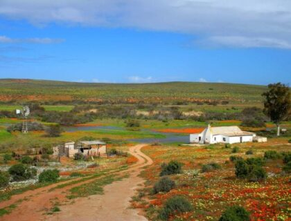 Namqualand countryside, tips for spring flower-viewing in Namqualand and Cederberg