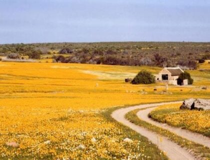 The Road Less Travelled in South Africa Nieuwoudtville-700