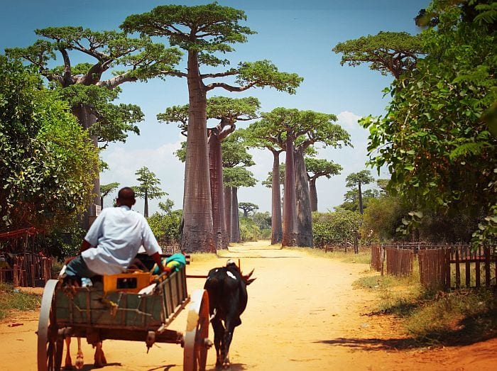Alley of Baobabs in Western Madagascar adventure